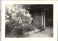 White House Front with Trellis in Summer
