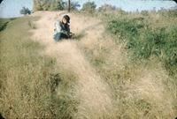 Bill Stark and L. Peterson inspect birdsfoot trefoil at Cliff Singley's farm.