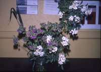 Wild rose bouquet, 1983
