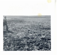 Jerry Muff looking over harvested corn field