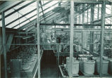 Greenhouse interior, The University of Iowa, 1930s