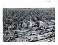 Soil erosion, 1969