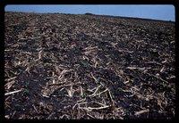 Mulch tilled field.