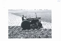 Archie McNiel cultivating corn, 1965