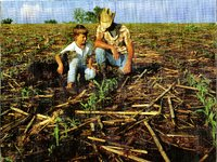 Unidentified man and young boy kneeling in corn field