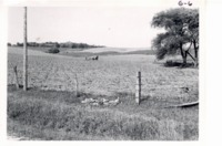 Cultivating check row planted corn, 1967