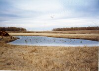 2002 - Shallow water area comstructed on David Sheridan's property