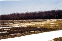 Beulah Valley Farms filter strip