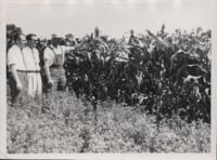 Corn in contoured field on the Davey farm.