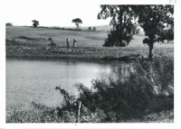 Pond on Louis Lane farm, 1962