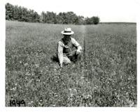 Roy White kneeling in field of Birdsfoot Trefoil, 1949