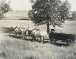 Four horse team and wagon