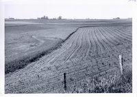 Strip cropping on Fred Moeller farm, 1960s