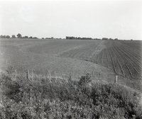 Terraced and Contoured Field with Unidentified Crop