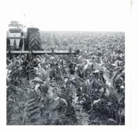 Six row cultivator, 1969