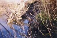 1998 - Yeager site snag on Flint River
