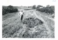 Vernon Baasch farm, 1960s