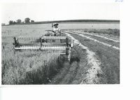 Windrowing oats on contour strips on Irwin Jebsen farm, 1963