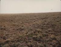 Soil Judging Contest Participants Treated Field - Alfalfa Brome Field.
