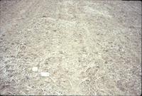 Dry cropland, 1988