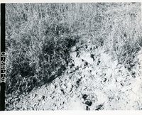 Coal mine spoil material, 1966