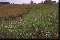 Wetland on the Sawyer Farm.