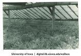 Plants in greenhouse, Fairbanks, Alaska, 1944