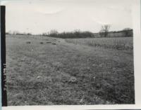 Crop land, 1967