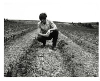 Man Inspecting Crops
