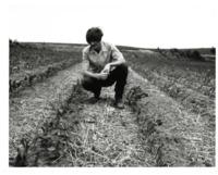Man Inspecting Crops