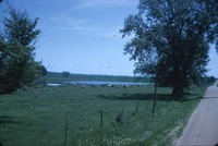 Pasture with pond and cattle.