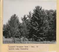 Windbreak on Leonard Bergman's Farm.