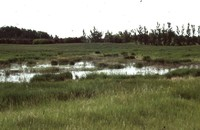 Wetland Restoration Project.