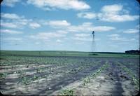 Contoured cornfield after heavy rain.