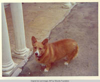 Victoria, the dog standing by two pillars of front entrance