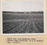Contour Bean Field - Minimum Tillage on the Smith Farm.