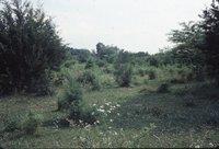 Carl Andersen's pasture, 1983