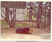 Sadie and Victoria laying in yard beside garden shed