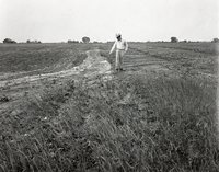 Man Points to Water Running Down Eroded Field
