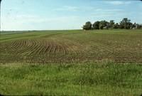 Broad based terraces on the Bumann farm.