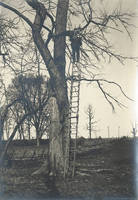 012_Dr. Keyes on a ladder by a tree