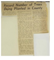1966 - Record Number of Trees Being Planted
