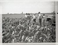 Group of Men in Corn Field