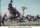 Man on camel, China, 1944