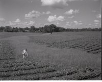 Young Girl Stands in Cornfield