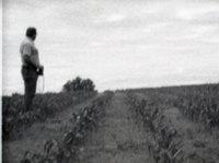 Side View of Unidentified Man Looking Away Standing in Corn Field