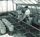 Students inspecting plants in a greenhouse, The University of Iowa, 1950s