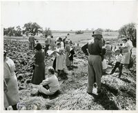 1948 - Onlookers at Field Day Plowing Contest