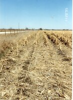 1995 - Ridge-till Planting Tried in Field