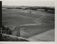 Contoured corn and field diversion terrace on the Browne farm.